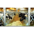 DAIRY /ANIMAL HUSBANDRY